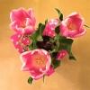 Tulip trio in container